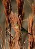 PalmWarbler-LAWD-FL-1-12-17-SJS-04