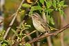 PalmWarbler-EmeraldaIsland-12-3-18-SJS-008