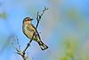 Yellow-RumpedWarbler-OcalaNF-11-14-18-SJS-007