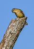 PalmWarbler-LAWD-10-16-20-sjs-04