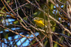 YellowBreastedChat-EmeraldaMarsh-10-11-19-SJS-001