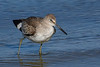 Willet-FortIslandTrlPark-Crystal River-3-14-19-SJS-005