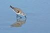 Sanderling-DaytonaBeachFl-2-14-17-SJS-003