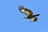 PiliatedWoodpecker-OcalaNF-6-21-20-SJS-07