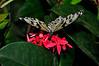 KeyWestButterfly&NatureConservatory -sjs-2015-029