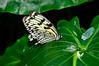 KeyWestButterfly&NatureConservatory -sjs-2015-040