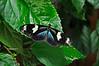 KeyWestButterfly&NatureConservatory -sjs-2015-004