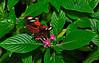 KeyWestButterfly&NatureConservatory -sjs-2015-028