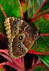 KeyWestButterfly&NatureConservatory -sjs-2015-024