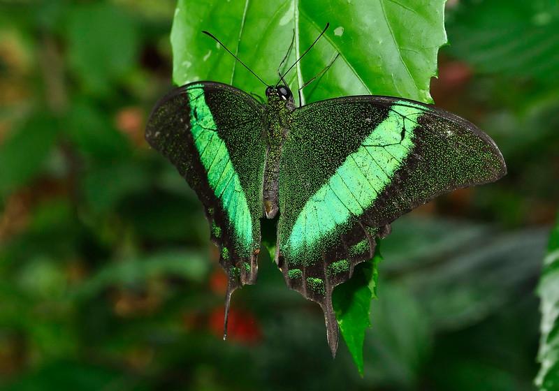 KeyWestButterfly&NatureConservatory -sjs-2015-003