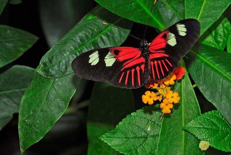 KeyWestButterfly&NatureConservatory -sjs-2015-021