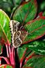 KeyWestButterfly&NatureConservatory -sjs-2015-001