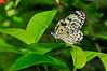 KeyWestButterfly&NatureConservatory -sjs-2015-038