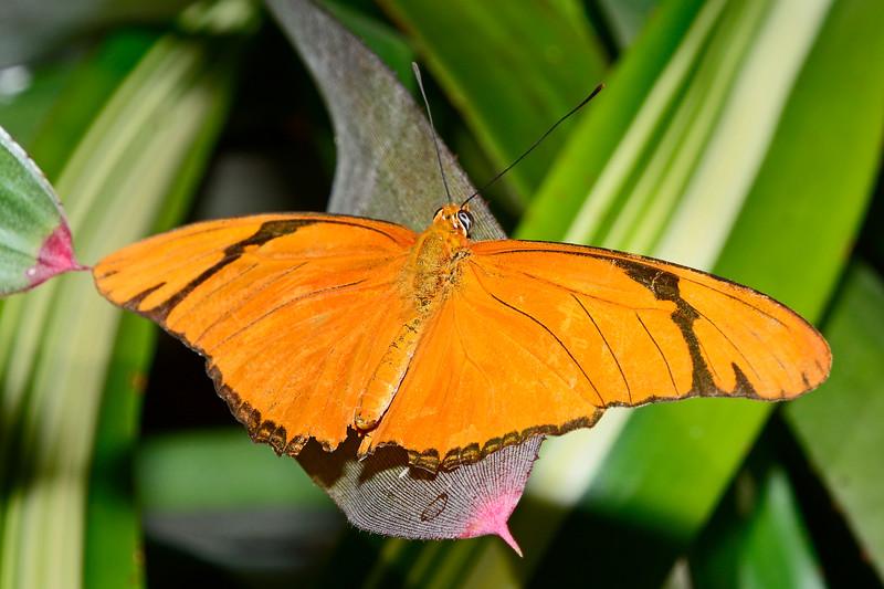 Julia-UF-ButterflyRainforest-2016-SJS-001