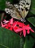 KeyWestButterfly&NatureConservatory -sjs-2015-030