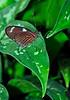 KeyWestButterfly&NatureConservatory -sjs-2015-002