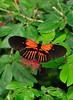 KeyWestButterfly&NatureConservatory -sjs-2015-007