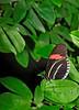 KeyWestButterfly&NatureConservatory -sjs-2015-020