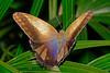 Owl-UF-ButterflyRainforest-2016-SJS-002