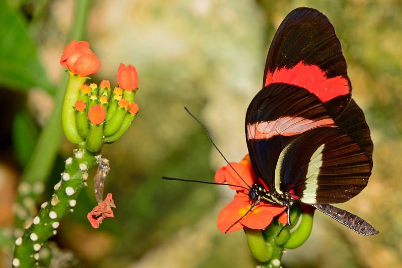 Postman-UF-ButterflyRainforest-2016-SJS-001