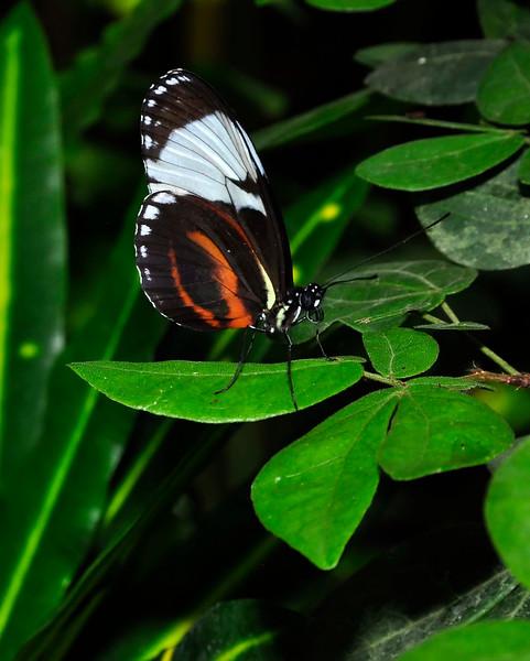 KeyWestButterfly&NatureConservatory -sjs-2015-023