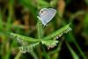 Ceranus Blue-PearParkFL-10-18-18-SJS-004
