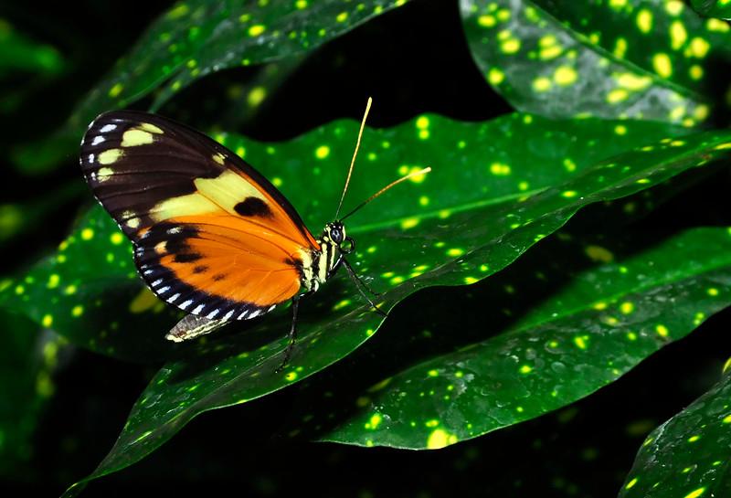 KeyWestButterfly&NatureConservatory -sjs-2015-025
