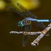 BlueDasher-BoydPark-4-12-19-SJS-004