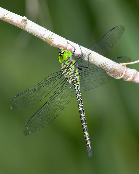 RegalDarner-EmeraldaMarsh-4-17-20 -SJS-001