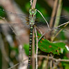 RegalDarner(male)-SawgrassIsland-6-23-19-SJS-004