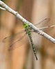 RegalDarner-EmeraldaMarsh-4-17-20 -SJS-002
