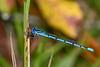AtlanticBluet(male)-OcalaNF-9-24-20-sjs-01
