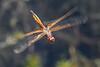 HyacinthGlider-CooterPondpark-3-19-20-SJS-001
