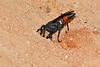 SpiderWasp-OcalaNF-9-21-18-SJS-005