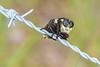 Robberfly-SawgrassIslandPreserve-9-13-19-SJS-003
