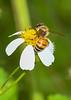 HoneyBee-OcallaNF-9-14-20-sjs-001