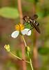 BeeFly-OcalaNF-9-12-20-sjs-003