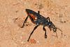 SpiderWasp-OcalaNF-9-21-18-SJS-010