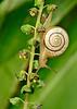 Snail-LAWD-8-10-18-SJS-002