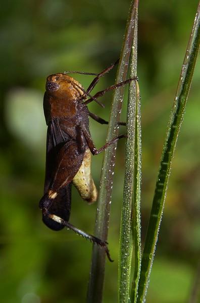 Grasshopper-03
