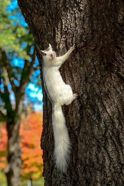WhiteSquirrel-BrevardNC-11-3-18-SJS-58