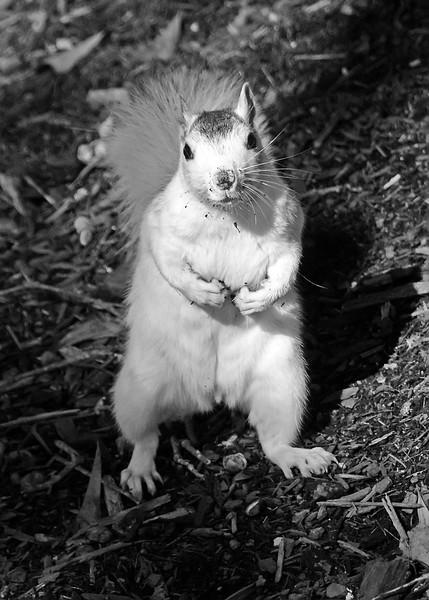 WhiteSquirrel-BrevardNC-11-3-18-SJS-29