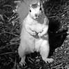 WhiteSquirrel-BrevardNC-11-3-18-SJS-29