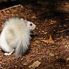 WhiteSquirrel-BrevardNC-11-3-18-SJS-15