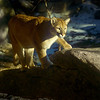 MountainLion-01