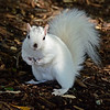 WhiteSquirrel-BrevardNC-11-3-18-SJS-45