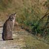 Bobcat-LAWD-12-15-19-SJS-003