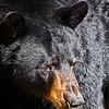 BlackBear2015-sjs-003