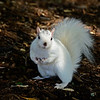 WhiteSquirrel-BrevardNC-11-3-18-SJS-46