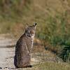 Bobcat-LAWD-12-15-19-SJS-004